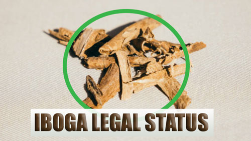 What is the legal status of Iboga ?