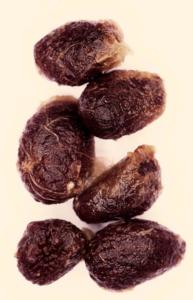 seeds iboga