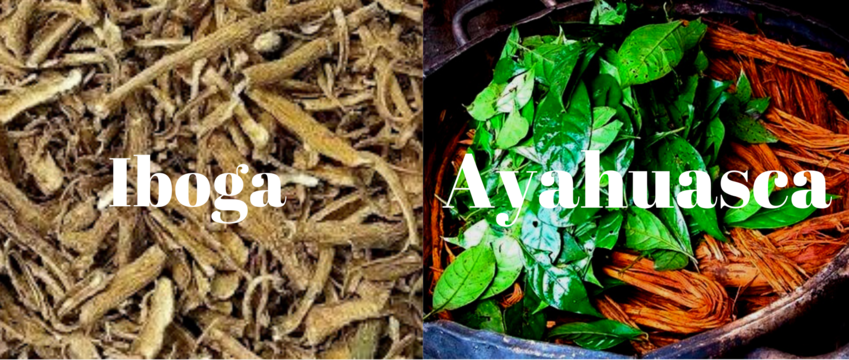 Difference between Iboga and Ayahuasca